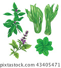 Set of color images of a thai basil, mint and cabbage pak choi.  43405471