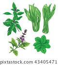 plant, green, leaf 43405471