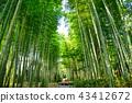 """Large diameter of bamboo forest"" of Izen City, Shizuoka Prefecture Shuzenji 43412672"