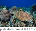 海龜 43413717