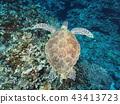 海龜 43413723