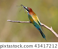 dragonfly bird bee-eater 43417212