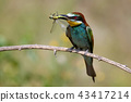 dragonfly bird bee-eater 43417214