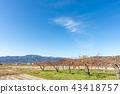 ไร่องุ่นของ Kinmi-cho, Gunma-cho, Date County, Fukushima Prefecture ที่ซึ่งรสชาติของฤดูใบไม้ร่วงเติบโตเต็มไปด้วยท้องฟ้าในฤดูใบไม้ร่วง 43418757
