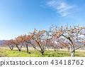 ไร่องุ่นของ Kinmi-cho, Gunma-cho, Date County, Fukushima Prefecture ที่ซึ่งรสชาติของฤดูใบไม้ร่วงเติบโตเต็มไปด้วยท้องฟ้าในฤดูใบไม้ร่วง 43418762