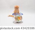 小貓和金魚 43420386