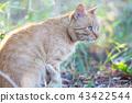 Cat 43422544