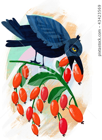Raven sits on a branch and eats dogwood berries 43423569