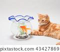 ลูกแมวและปลาทอง 43427869