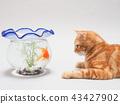 แมว,สัตว์,ภาพวาดมือ สัตว์ 43427902