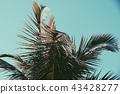 Palm Tree Crown Leafs 43428277