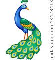 Cartoon beautiful peacock 43428413