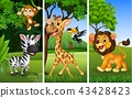 Set of three wild animals with nature background 43428423