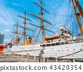 海湾 月桂树 船 43429354
