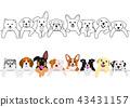 สุนัข,สุนัช,ลูกหมา 43431157
