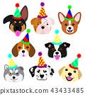 ลูกสุนัขน่ารักใบหน้าตั้งหมวกปาร์ตี้ 43433485