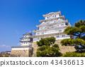 Himeji castle during sakura blossom time to bloom. 43436613