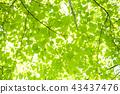 tender, green, verdure 43437476
