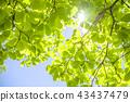 Refreshing fresh green and sun 43437479