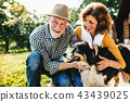 A senior couple crouching and petting a dog. 43439025