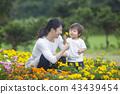gardening, flower bed, flower garden 43439454