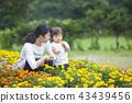 gardening, flower bed, flower garden 43439456