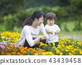 gardening, flower bed, flower garden 43439458