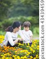 gardening, flower bed, flower garden 43439459