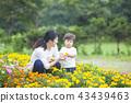 gardening, flower bed, flower garden 43439463