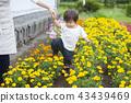 gardening, flower bed, flower garden 43439469