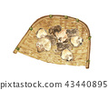 말린 표고 버섯 43440895