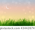 Leaves of grass and stars in sunrise sky.  43442674