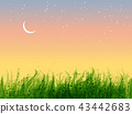 Leaves of grass and stars in sunrise sky.  43442683