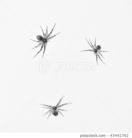 Predatory spider isolated on white background 43442762