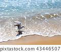 海鷗 海 海邊 43446507