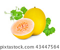 whole and half yellow cantaloupe melon isolated 43447564