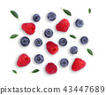 blueberries and raspberries with green leaf  43447689