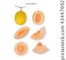 yellow cantaloupe melon isolated on white  43447692