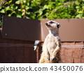 สัตว์ 43450076