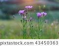 Pink flowers on green field 43450363