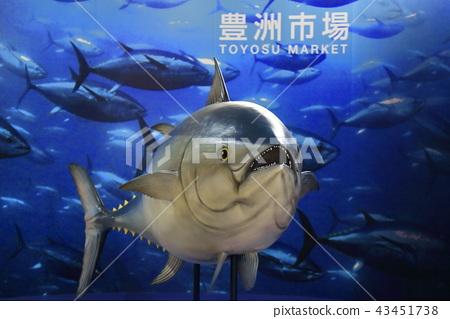 丰洲市场金枪鱼模型 43451738