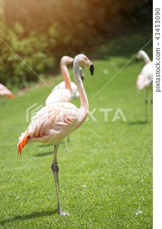 pink flamingos 43453090