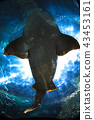 shark in loro park 43453161