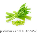 celery isolated on white background 43462452