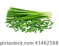 Chinese chives, Garlic chives isolated on white 43462568