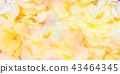 玫瑰 玫瑰花 花朵 43464345