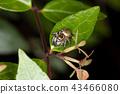 ธรรมชาติ,แมง,แมลง 43466080