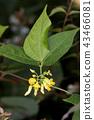 ธรรมชาติ,ดอกไม้,ไม้ 43466081
