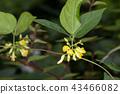 ธรรมชาติ,ดอกไม้,ไม้ 43466082