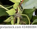 แมง,แมลง,ธรรมชาติ 43466084